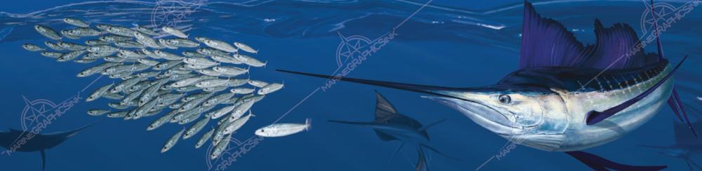 sailfish boat wraps