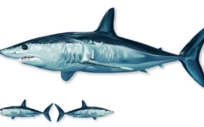 mako shark decal